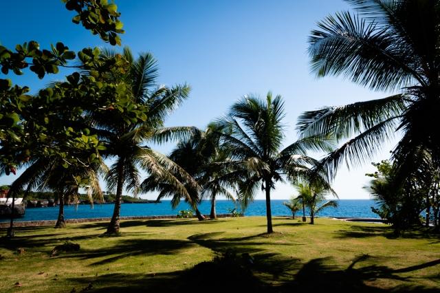 Boca Chica palm trees